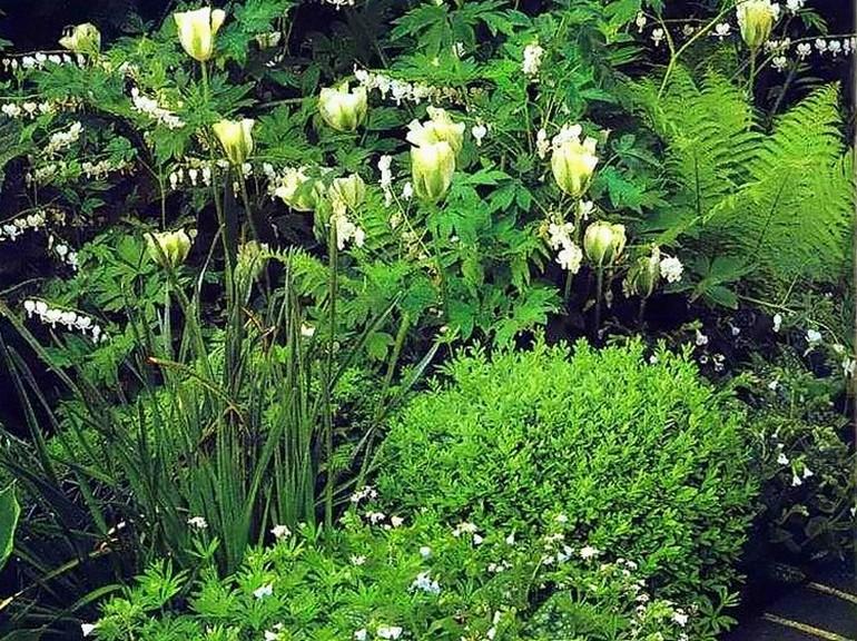 Бело-зеленый цветник