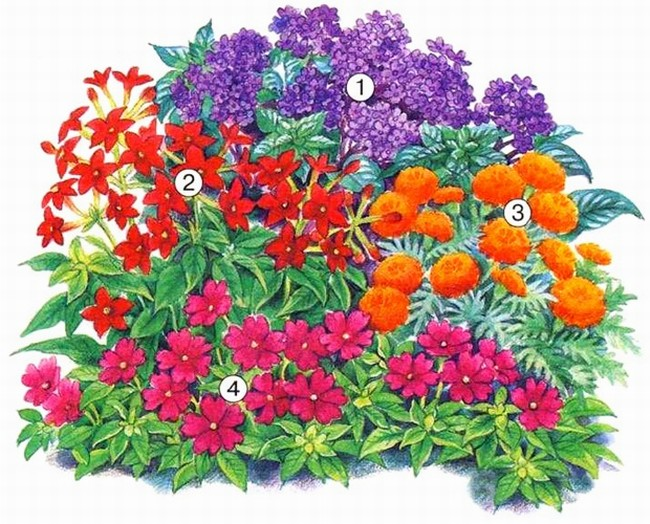 Садовая клумба с яркими красками