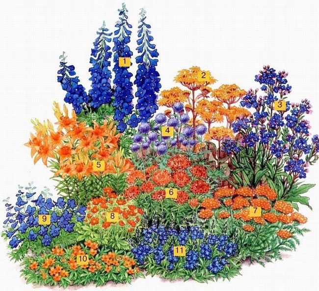 Схема цветника из